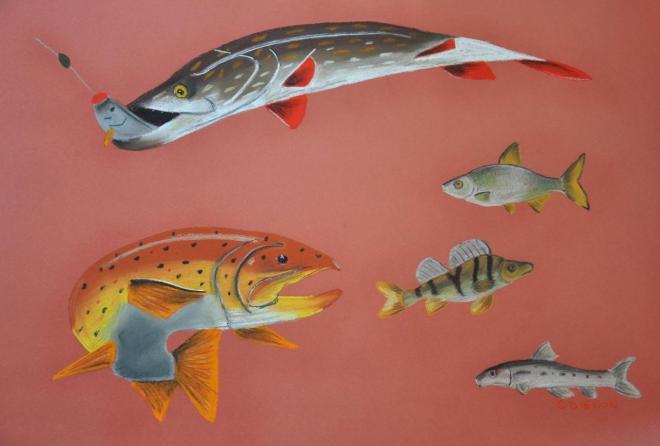 poissons de rivière