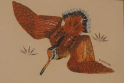 becasse-avec-les-plumes-du-peintre-30x40-pastel-gras.jpg